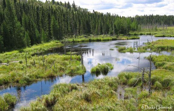 Boreal Wetland