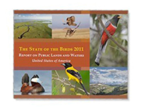 Third State of the Birds Report published