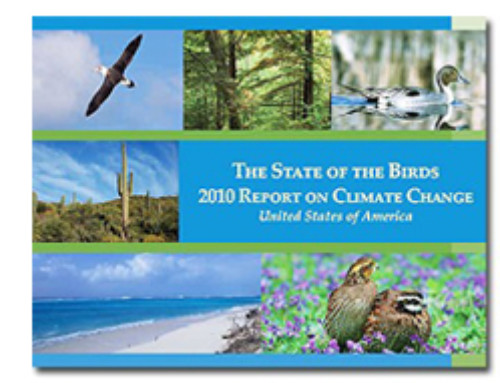 Second State of the Birds report published