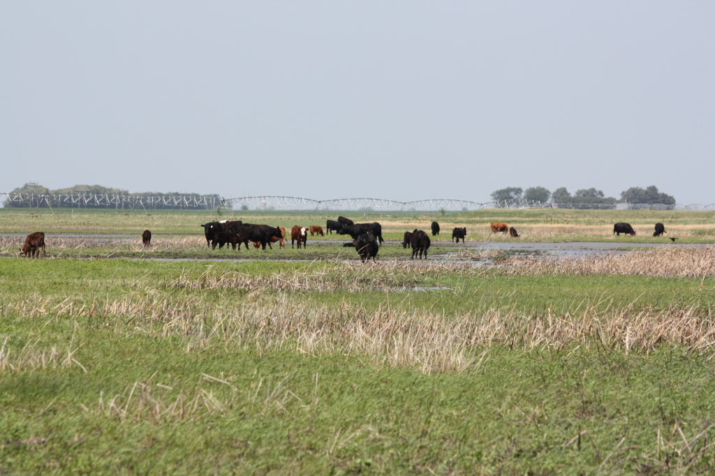 Nebraska Environmental Trust grants have funded miles of perimeter and cross-fencing, as well as watering systems to that grazing cattle can be used to help manage wetlands.