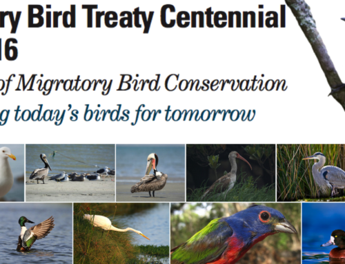 Joint Ventures Embrace Migratory Bird Treaty Centennial