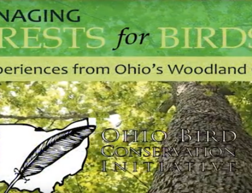 Managing Forest for Birds Video Series