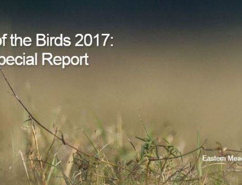 Farm Bill Works for Landowners and Birds, New Report Finds