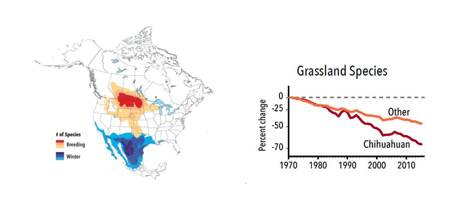 Grassland Birds in Crisis - Migratory Bird Joint Ventures
